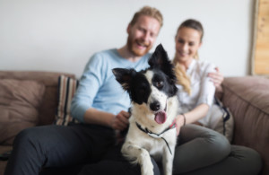 Allowing Pets and Service Animals in Your Rental