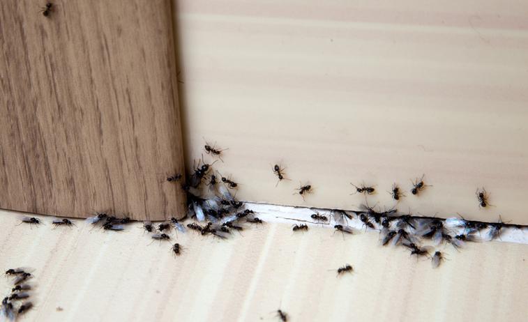 Summer Pest Prevention